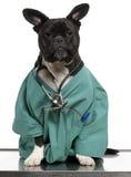 Kreuzen Sie Hund, den Hund, der in einem Doktormantel gekleidet wird Lizenzfreie Stockfotos