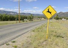 Kreuzendes Warnzeichen der Rotwild auf leerer Straße Stockbilder