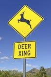 Kreuzendes Warnzeichen der Rotwild auf leerer Straße Lizenzfreies Stockfoto