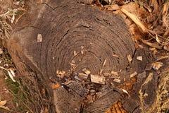 Kreuzschnitt eines alten Baums Stockbild