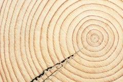 Kreuzschnitt eines Holzbalkens Stockbild