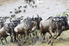 Kreuzung des Mara Stockfotos