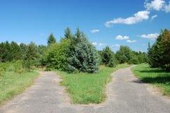 Kreuzungen im Park Stockfotos
