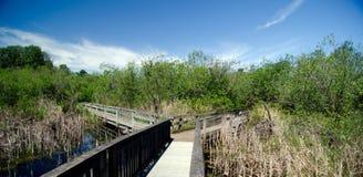 Kreuzungen von Spuren an der Sammamish-Flussquelle in Marymoor Lizenzfreie Stockfotos