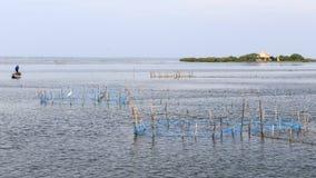 Krewetka rybak blisko Kuruchadditivu wyspy Jaffna, Sri lanki - fotografia royalty free