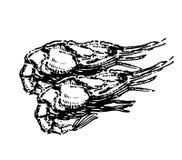 Krewetkowa ręka rysujący dennego jedzenia nakreślenia ilustracyjny wektor ilustracja wektor