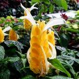 Krewetkowa roślina Obraz Stock