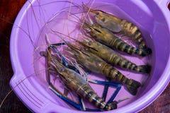 krewetkowy aquaculture wysyłający za wielkiej białej garneli, ekonomiczny, Łapie w górę dziecka krewetkowego aquaculture z przyna zdjęcia royalty free