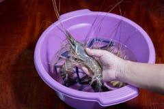 krewetkowy aquaculture wysyłający za wielkiej białej garneli, ekonomiczny, obraz royalty free