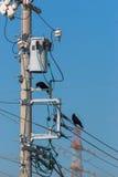 Krähen auf elektrischen Drähten gegen blauen Himmel Lizenzfreies Stockbild