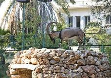 Kri-Kri, cabra de montaña del Cretan Foto de archivo