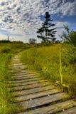 Kriechender Wacholderbusch-Natur-Spur Stockfotos