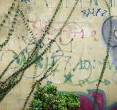 Kriechpflanze lizenzfreie stockbilder