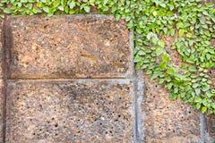 Kriechpflanze auf der Wand lizenzfreies stockbild