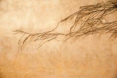 Kriechpflanze auf einer Wand stockfoto
