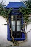 Kriechpflanze und Fenster Stockbilder