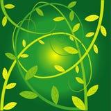 Kriechpflanzeanlagen Lizenzfreie Stockfotografie