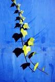 Kriechpflanzenanlage auf einer Wand mit Blattschatten stockbilder