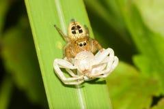 Krieg der Spinne Stockfotografie