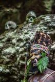 Krigaren av en Papuanstam av Yafi Royaltyfri Bild