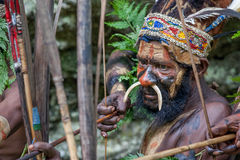 Krigaren av en Papuanstam av Yafi i traditionell kläder, prydnader och färgläggning Syften för forsar en bågskytt Royaltyfri Foto
