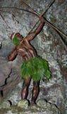 Krigarestam Yaffi i krigmålarfärg med pilbågar och pilar i grottan New Guinea ö Royaltyfria Bilder