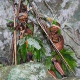 Krigarestam Yaffi i krigmålarfärg med pilbågar och pilar i grottan New Guinea ö Arkivfoto