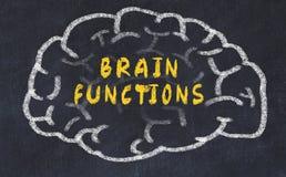 Krijttekening van menselijke hersenen met de functies van inschrijvingshersenen royalty-vrije stock afbeelding