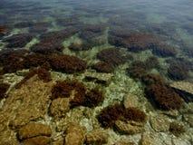 Krim stenig kust Arkivbild