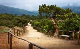 Krim väg i forntida skog Royaltyfria Foton