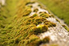 Krisha用绿色青苔盖了 免版税库存照片