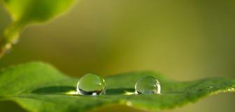 Kristal-als waterdalingen op blad Stock Afbeelding