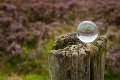 Kristallen bol met de bezinning van een heide Stock Foto's