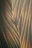 Kristallen van Ascorbinezuur Royalty-vrije Stock Afbeeldingen