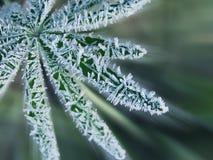Kristallen van ijs op een groen blad Stock Foto's