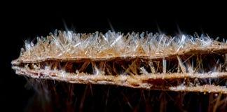 Kristaller för stenskogselenite Arkivbild