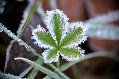 Kristallisiertes Blatt im Frost Stockbilder