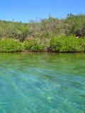 Kristalliskt vatten och vegetation Venezuela Arkivfoto