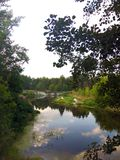 Kristallklar flod som omges av träd från skogen royaltyfri foto