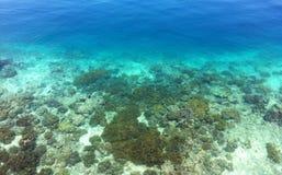 Kristallklar havsikt med korall Arkivbilder