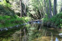 Kristallklar skog för ström på våren royaltyfri foto