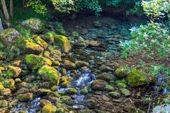 Kristallklart vatten av bergfloden som kommer från blidvädret Nationalpark av Picosen de Europa royaltyfri bild