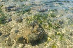 Kristallklart vatten av det tropiska havet, Phuket Arkivbild