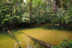 Kristallklart vatten i floden Royaltyfria Bilder