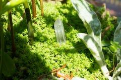 Kristalsteen in groene openlucht royalty-vrije stock fotografie