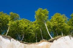 Kritaklippa på ön Ruegen Arkivfoto