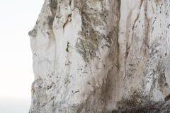 Kritaklippa på moensklint Royaltyfri Fotografi