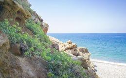 Kritamos-Anlage, die auf den Felsen auf Seehintergrund wächst Supernahrungsmittelseefenchel Kretische Kräuter für Salate stockfotografie
