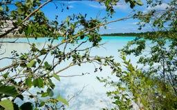 Kritiek milieugebied met alkalische meer en boomtakken royalty-vrije stock fotografie