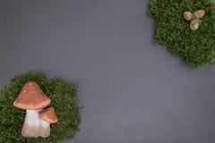 Kritisera brädet med mossa, ekollonar och champinjoner Arkivbild